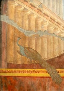 Fresque, peinture a fresco, paon, villa de Poppée, Pompéi