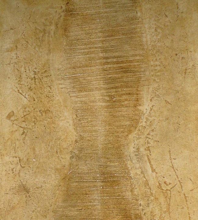Matière pour décoration murale à la chaux